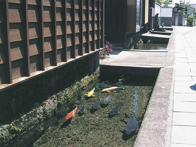 長崎 インスタ映え 鯉の泳ぐまち