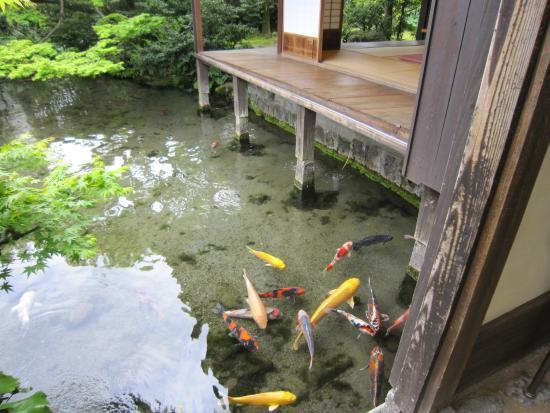 長崎 インスタ映え 鯉の泳ぐまち2