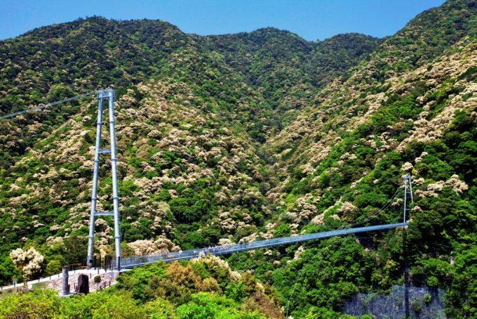 宮崎県 インスタ映え 照葉大吊橋2