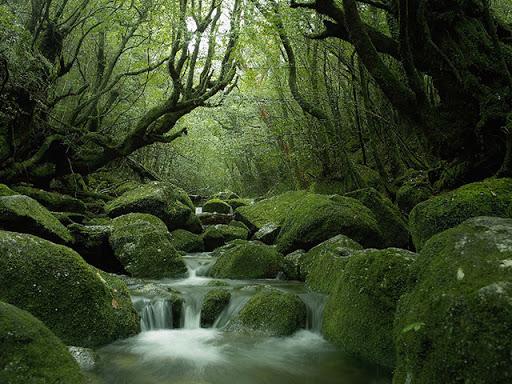 鹿児島県 インスタ映え 白谷雲水峡3