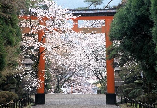鹿児島県 インスタ映え 霧島神宮桜