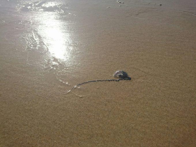 main beach クラゲ