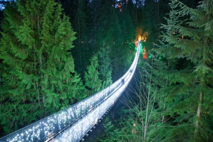 Capilano Suspention Bridge  night