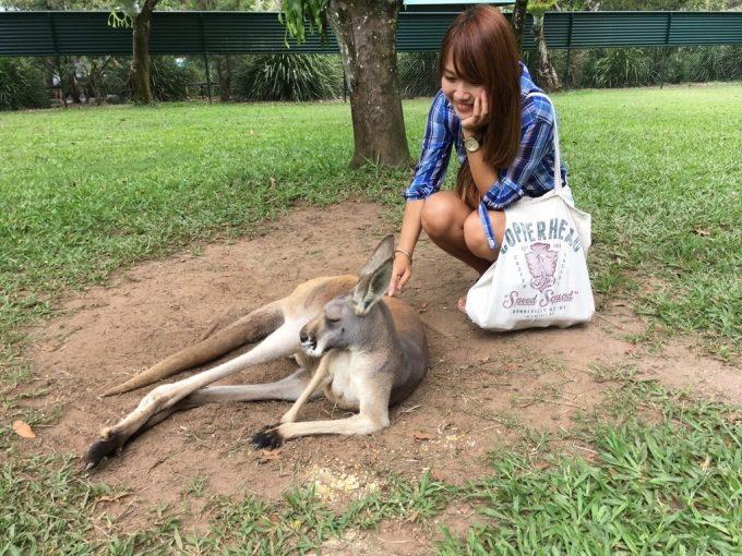 Australia ZOO カンガルー
