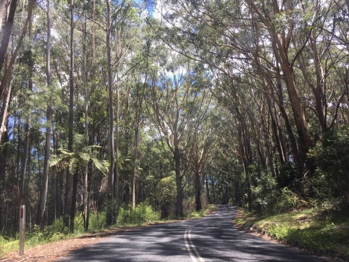 Springbrook National Park2