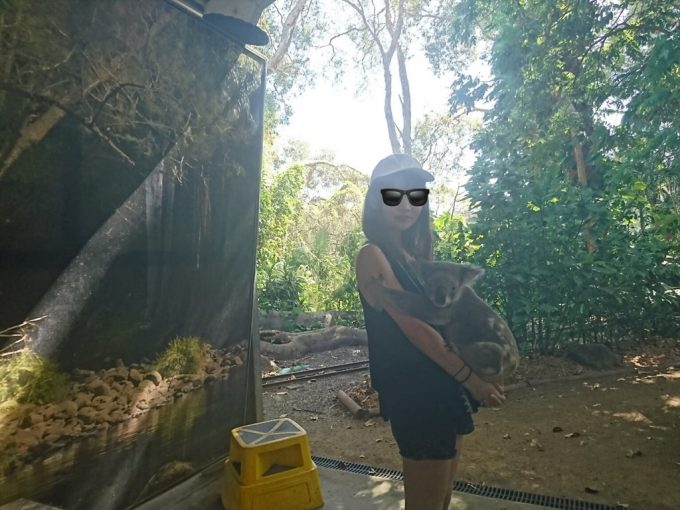 Currumbin Wildlife Sanctuary コアラ