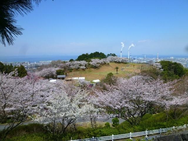 三島公園は、愛媛県の桜の名所