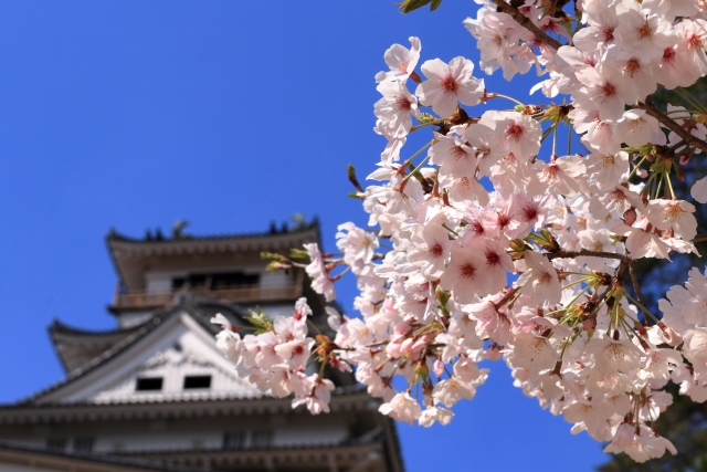 高知市の起源は高知城にあり