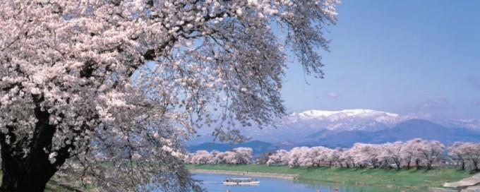 一目千本桜(ひとめせんぼんざくら)