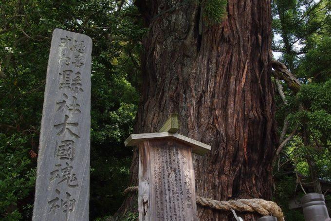 福島県 パワースポット 大國魂神社 いわき市 大杉