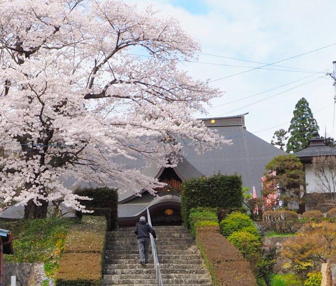 龍隠院(りゅうおんいん)の桜