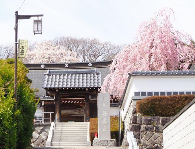 法蔵寺(ほうぞうじ)の桜