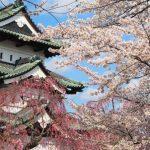 日本屈指の桜の名所・弘前城の見所を厳選