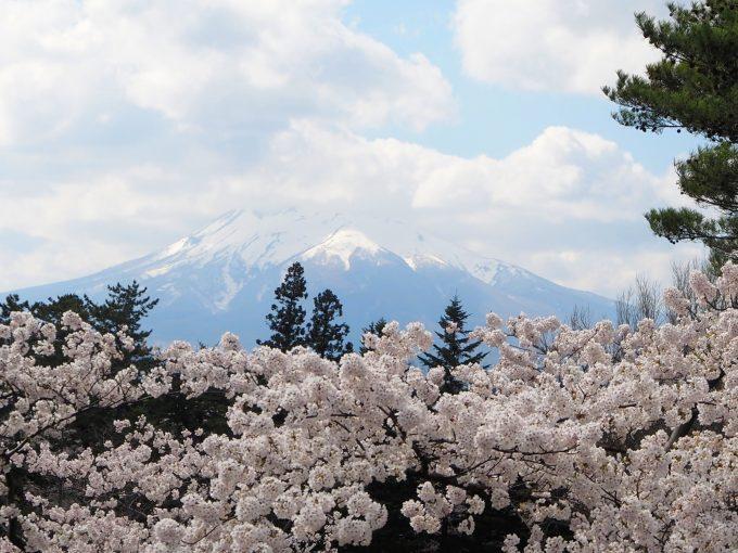 弘前公園 本丸 石垣の上からの眺め