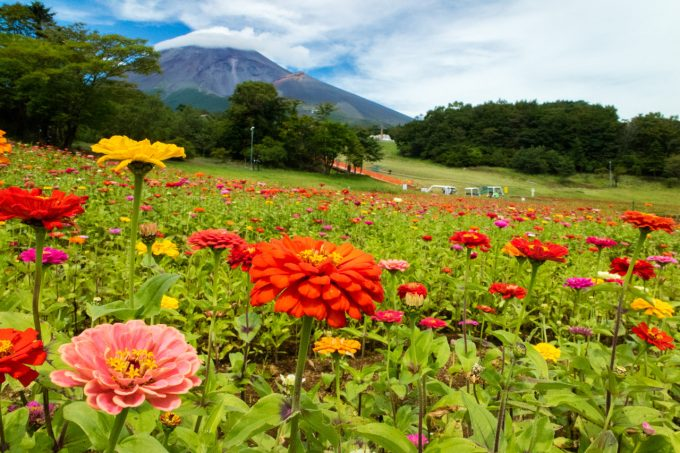 天空の花畑&富士花めぐりの里