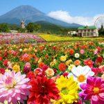 花に囲まれて気分がアガる♪温暖な静岡県で花めぐりに最適なスポット10選