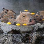 静岡県の動物園&水族館で可愛い動物たちと触れ合おう!