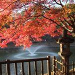 岡崎市の観光をもっと楽しく!見逃せないスポットを厳選