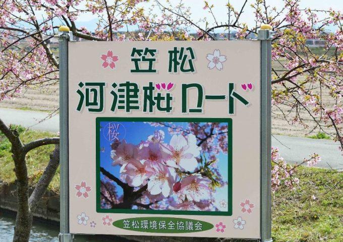 笠松河津桜ロード2