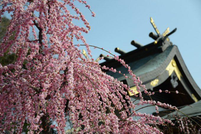 三重県 梅 結城神社