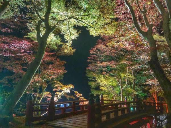 横蔵寺ライトアップ