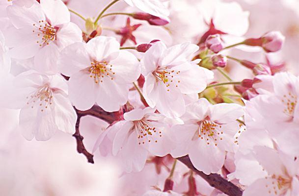 九州各県のお花見厳選スポット