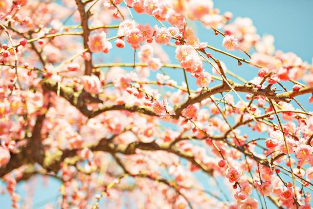 夜桜見物におすすめの東京都内の厳選スポット