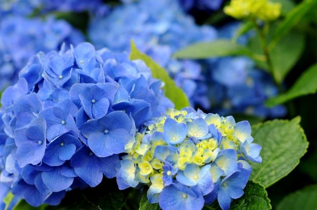 6月に北海道を満喫するならお勧めの観光名所