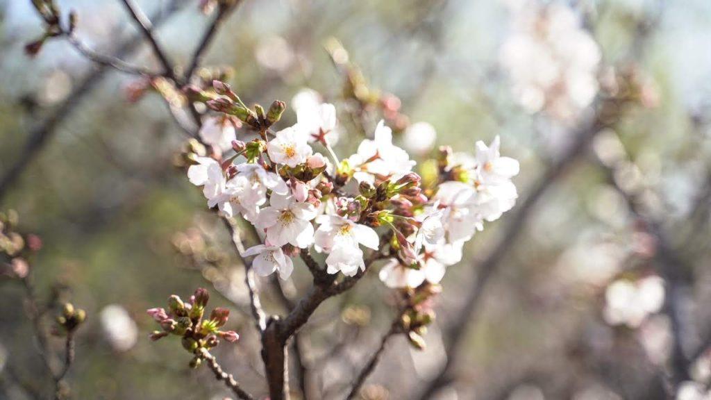 九州各県のお花見スポット35選